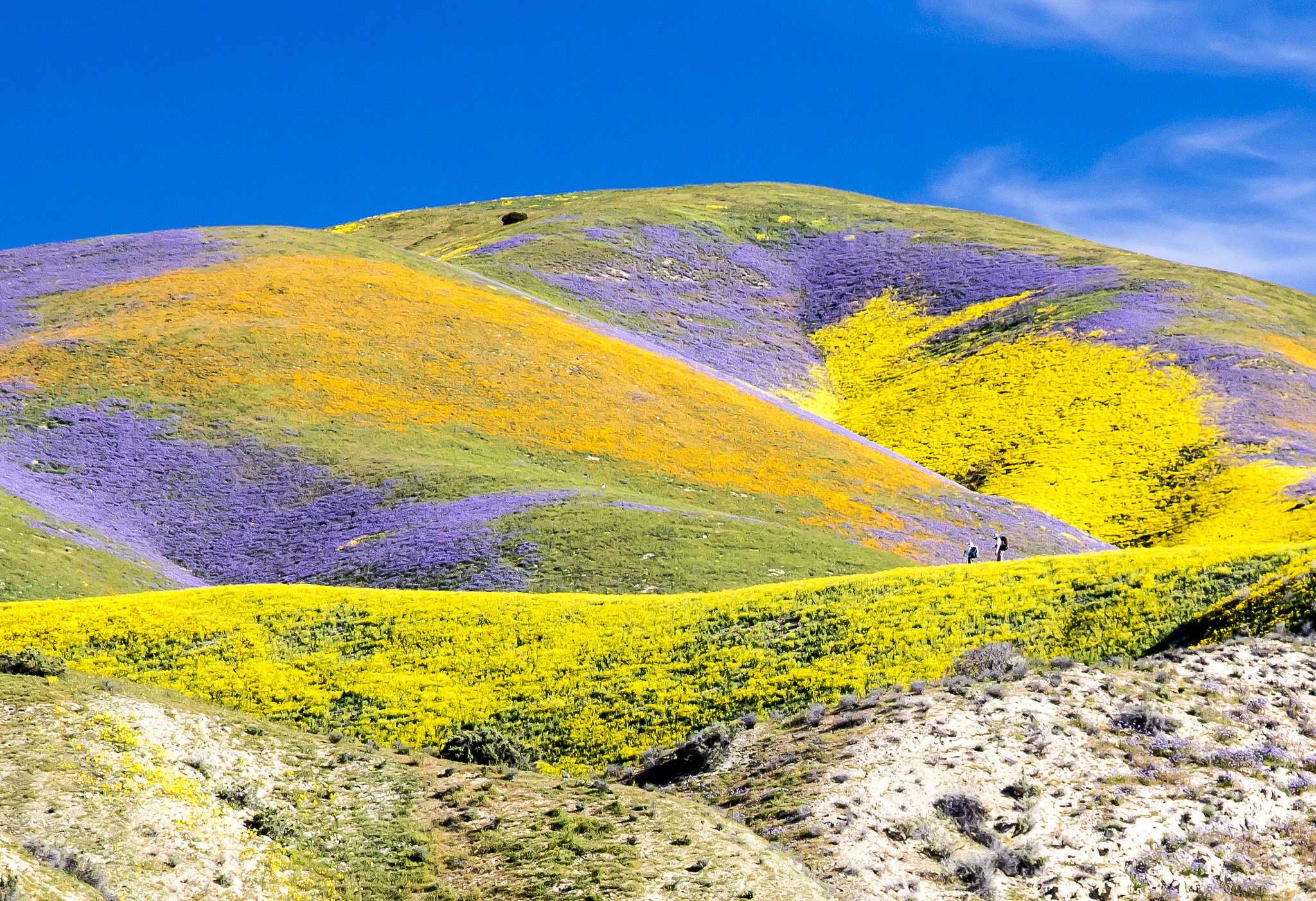 "A spring ""superbloom"" at Carrizo Plains (Flickr: Bureau of Land Management)"