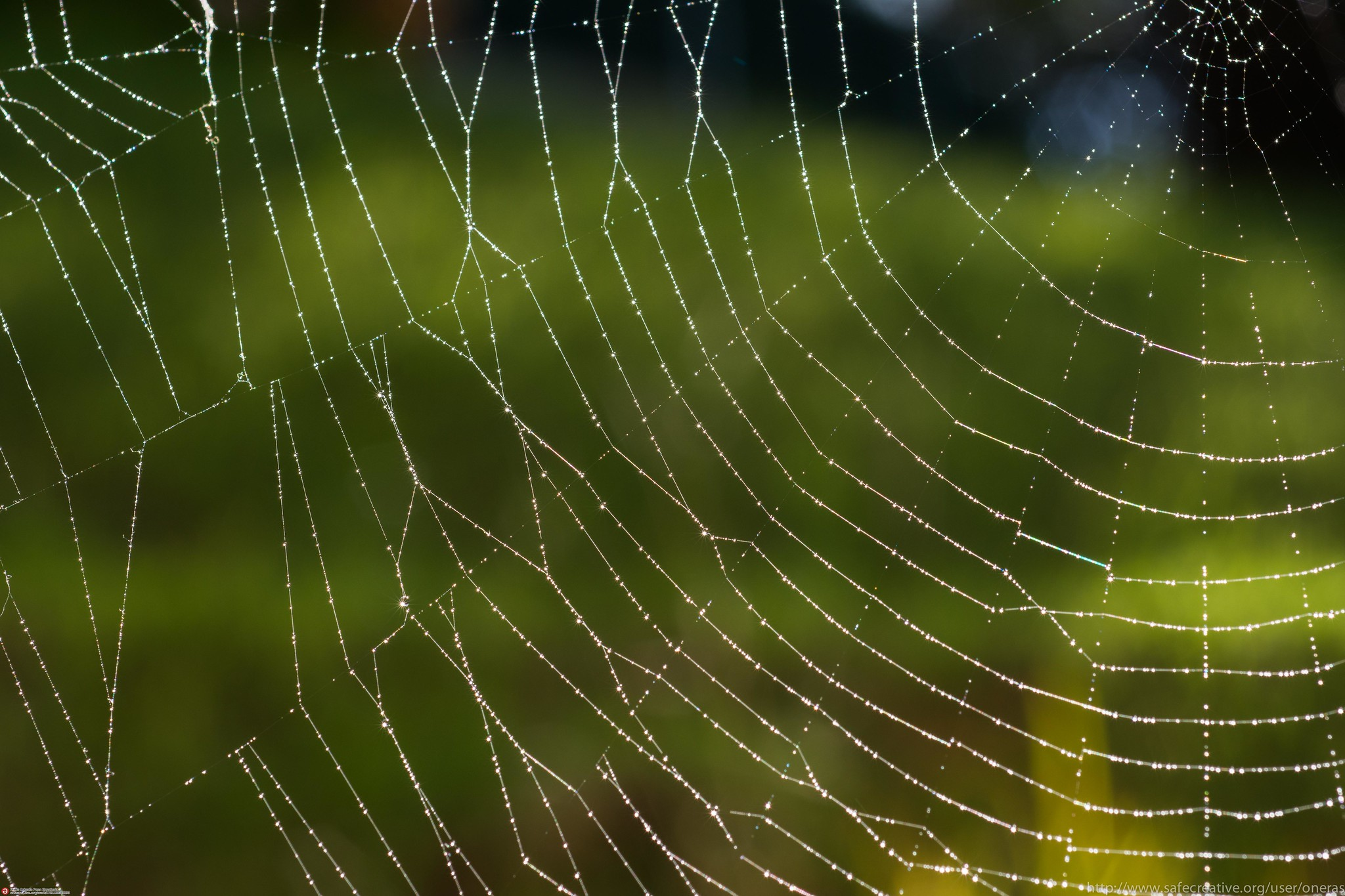 A spiderweb beaded with dew