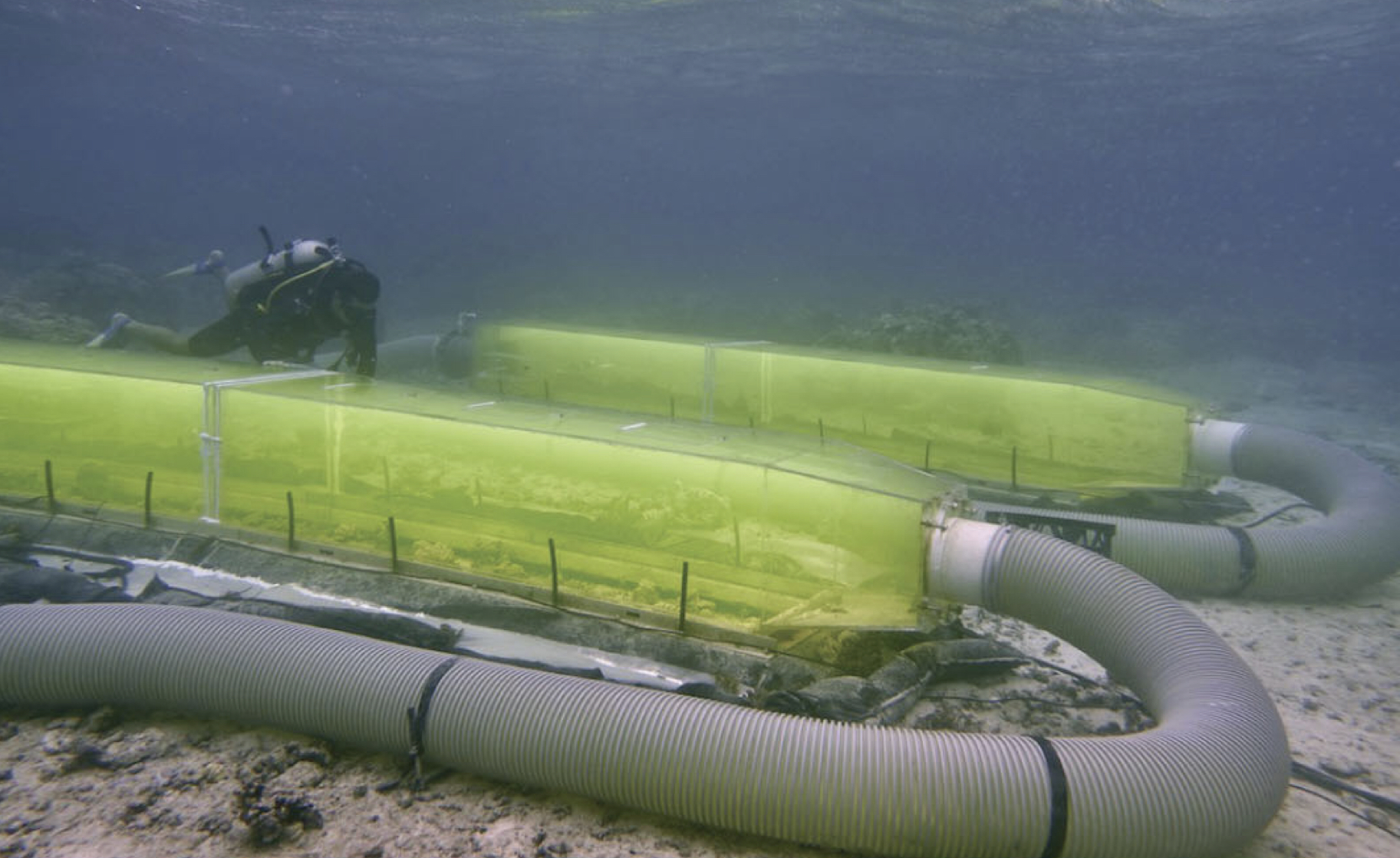 "Twin ""flumes"" placed over patches of coral reef to allow manipulation of the water chemistry"
