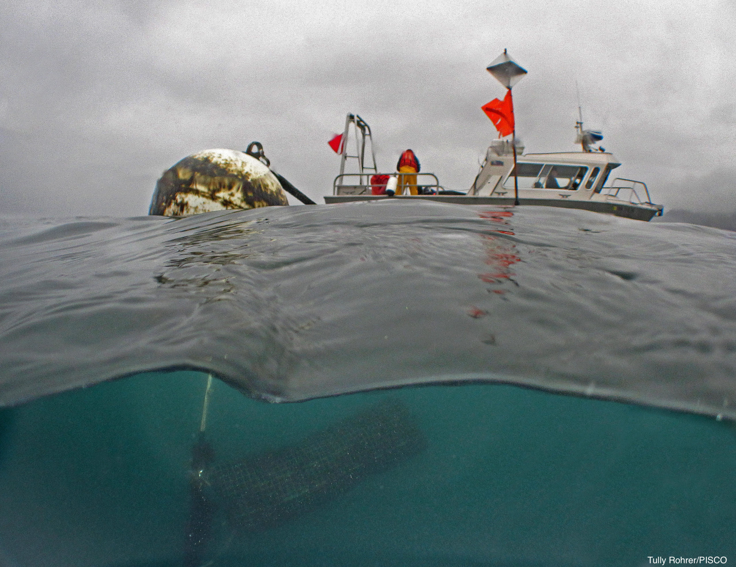 A boat and buoy, viewed from halfway below the surface of the water